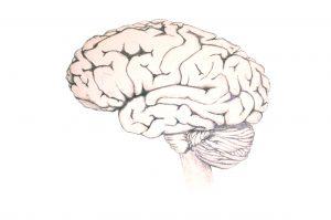 ze-brain